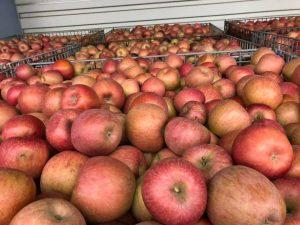 台風19号の被害に遭ったりんご